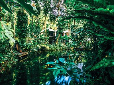 Daintree Eco Lodge Spa Angebot aufrufen